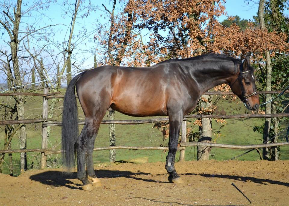 Lubello stallone da Luberon.jpg 2